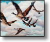 Geese in Flight - 20x24 - Oil