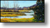 Wyoming River -10X20 - Oil